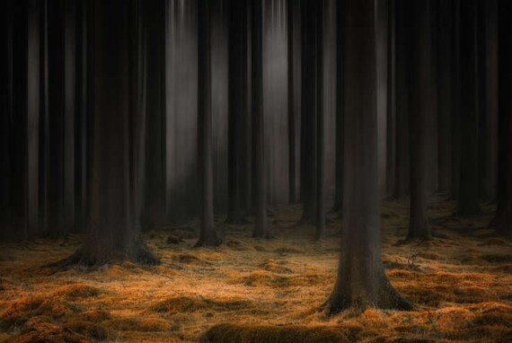 Mystic Forest Wallpaper Dark Forest Wallpaper Nature Wall
