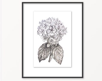 Flower sketch etsy flower drawing botanical sketch pencil sketch black and white print original hydrangea graphite sketch botanical flower cottage chic mightylinksfo