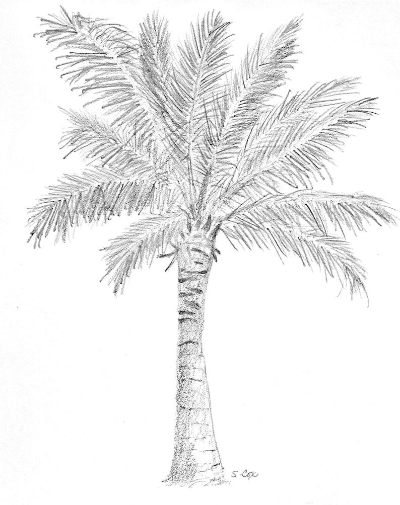 Palm tree art nature pencil sketch coastal drawing palm tree print tropical artwork nature art tree sketch black and white print