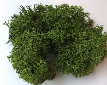 Artificial Moss   FOREST DARK GREEN - preserved reindeer moss for air plants, tillandsia, floristry, hanging basket, airplant decoration