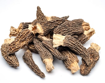Dried Morel Mushrooms   Gourmet Morchella Conica