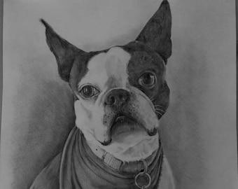 Drawing, pencil, portrait, animal