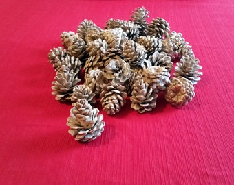 Bleached Pine Cones, Red Pine Pinecones, Home Decor, Wedding Decor, Fall Decor, Winter Decor, Crafts Wreaths Ornaments Potpourri