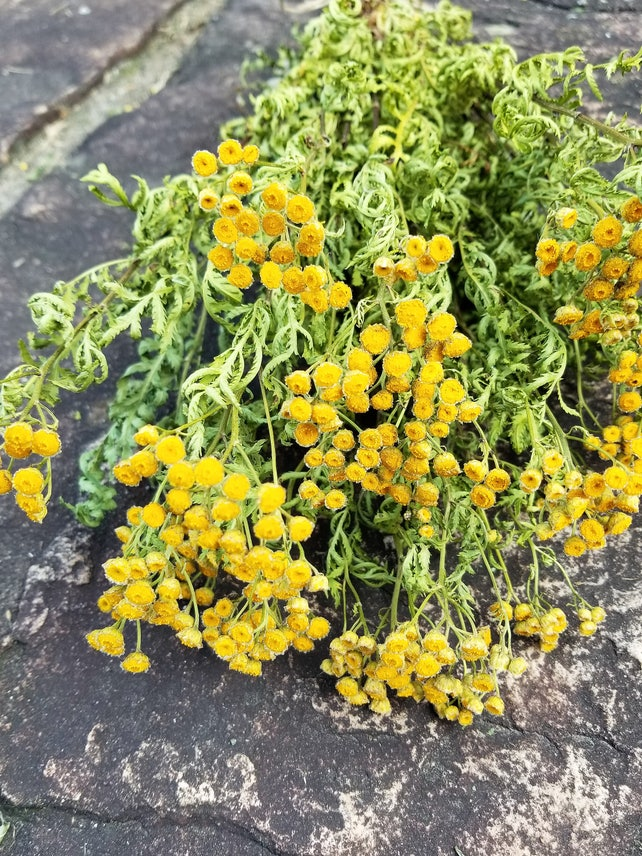 Dried Tansy Dried Wildflowers Yellow Flowers Dried Flower Etsy