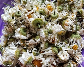 Dried Daisies, Dried Daisy, Dried Wildflower, Dried Wild Flowers, Oxeye Daisy, Leucanthemum vulgare