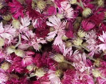 Dried Pink Bachelor's Button, Cornflower, Centaurea cyanus, Dried Flowers, Dried Flower Bouquet, Pink Flowers, Flower Potpourri