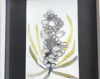 Pastel Banksia Drawing