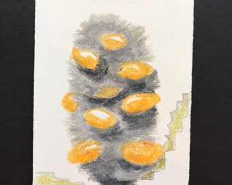 A Banksia (framed oil pastel drawing)