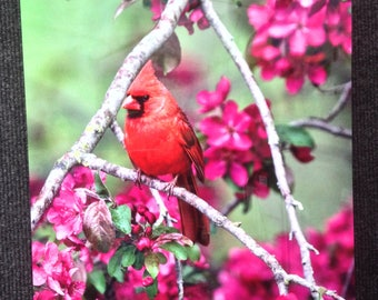 Cardinal in Blossoms