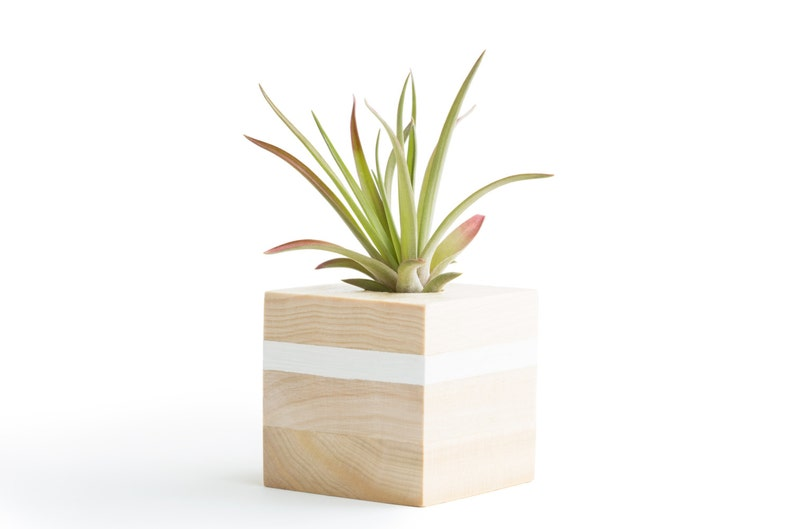 Air Plant Display White Holder Birthday Gifts