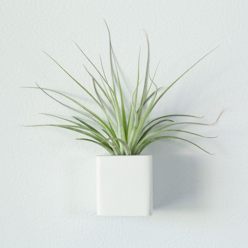 Gifts for Girls Board Magnet Unique Office Decor White Air Plant Magnet Christmas Gifts Tiny Indoor Plant Holder Refrigerator Magnet