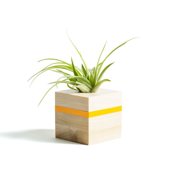 """Sitting Air Plant Buddy /""""Jerry/"""" Air Plant Holder//Unique Gift Beautiful Home Decoration."""