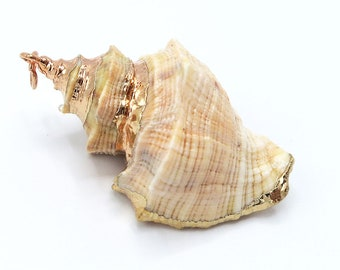 1 Piece Rose Gold Plated Natural Sea Shell Trumpet Conch Pendant Bead 40x35mm
