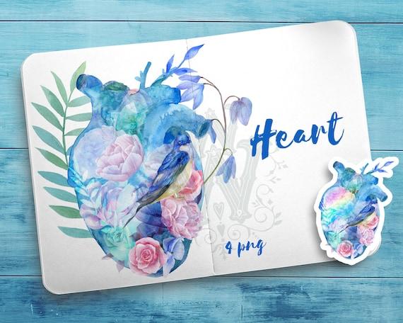 Herz Clipart Anatomie Regenbogen Aquarell Liebe blau   Etsy