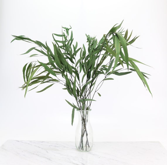 green, preserved eucalyptus niccoli branch in 60 cm length dried flowers Eucalyptus for decorating & crafting