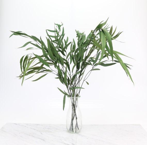 grüner, konservierter Eukalyptus niccoli Zweig in 60 cm Länge Trockenblumen Eucalyptus  zum Dekorieren & Basteln