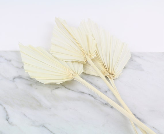 naturfarbenes Palmblatt Speer brauner Palmwedel Deko Palmenblatt 30 - 40 cm Trockenblumen Boho dried flower palm leaf