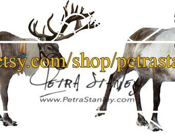 2 Reindeer Overlays - Set of 2 Transparent Reindeer - Photoshop Reindeer - Reindeer Clipart - Digital Overlay - Instant Download - PNG Deer