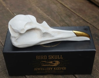 f90c2c0cf Bird Skull Jewellery Keeper