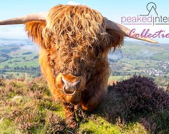 "Head On Highland Bull ""Ardbeg"""