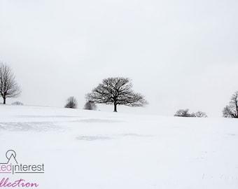 Snowy Trees at Chatsworth
