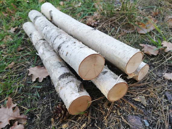 5 Birch Logs White Wood Logs Fireplace Logs Craft Birch White Etsy