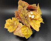 Begonia 39 Autumn 39