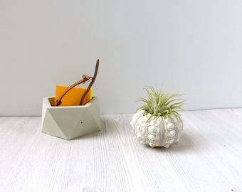 sea urchin air plant holder // desk accessory // cute gift // minimalist decor // birthday gift // wedding favor // sea shell plant