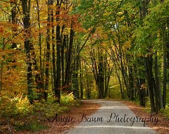 Digital Backdrop   Stock Photo   Fall Photography Download