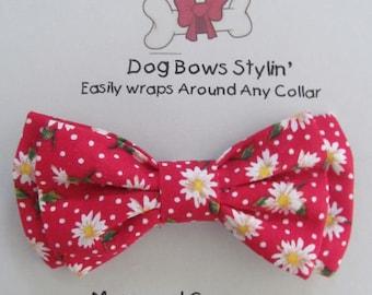 Dog Bow Tie - Dog Bowtie - Daisy Dog Bow Tie - Dog Bow - Cat Bow Tie - Dog Collar Bow