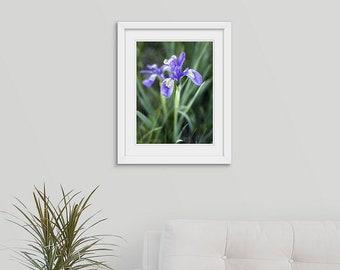 Framed 16x20 Wild Iris Flower Photo Print, Wyoming Floral Decor Framed Wall Art, Mothers Day Housewarming Gift