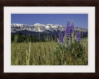 Purple Lupine Flower 16x24 Framed Wall Art, Mountain Wildflower Photo Print, Home Decor Housewarming Gift for Her