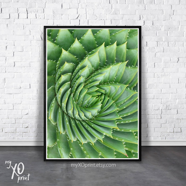Kaktus Na ścianę Soczyste Drukowania Plakatu Spirali Roślin Decor Sztuka Nadający Się Do Wydruku Digital Instant Download Sztuka Zielony Kaktus