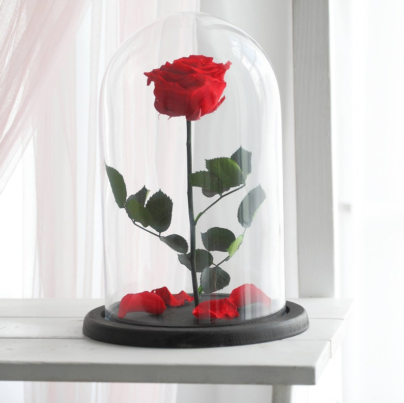 Beauty And The Beast Rose Forever Rose Enchanted Rosered Etsy