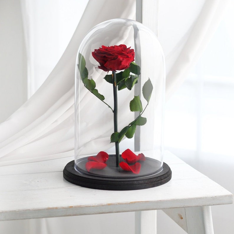 Schöne Und Das Biest Rose Enchanted Rose Rose In Glaskuppel Etsy