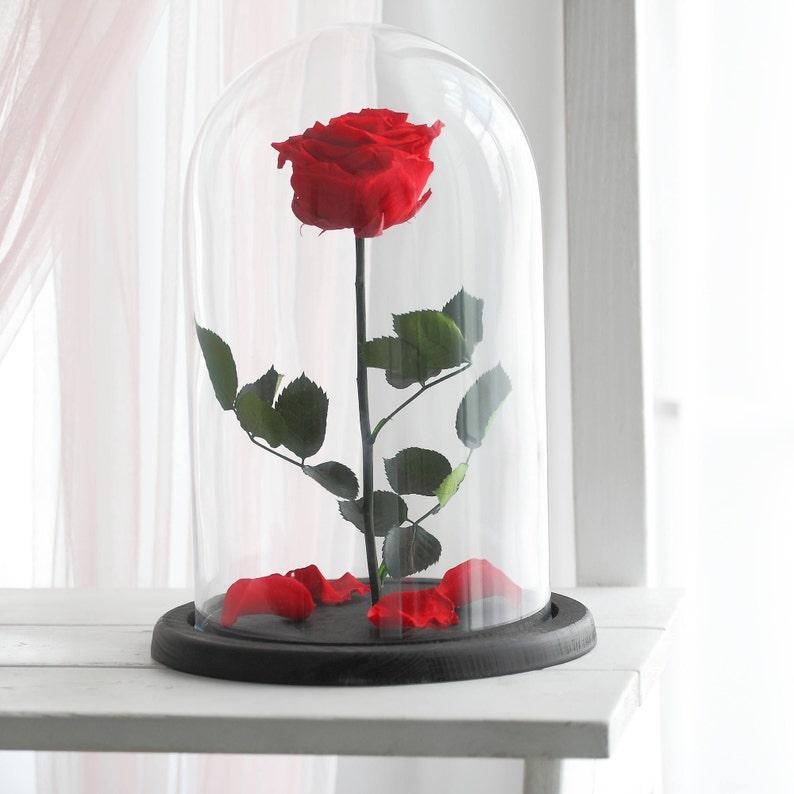 Schöne Und Das Biest Rose Rose Enchanted Rose Rose In Etsy