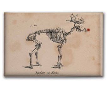Rudolf Christmas Magnet |  Reindeer Skeleton | Rudolph the Red Nose Reindeer | Deer Skeleton | Weird Christmas | Gift for Mom