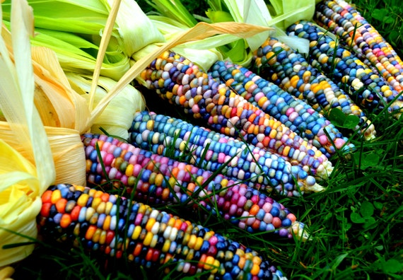 100 Glass Gem Corn Seeds Etsy