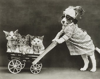 Puppy and Kittens Photo, Nursery Room, Baby Gift, Animal Photos, Nursery Art, Black White Photography, Anthropomorphic Animals, Sepia Photo,