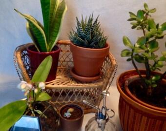 Mini canapé Emmanuelle, pour poupée ou porte plante bohème