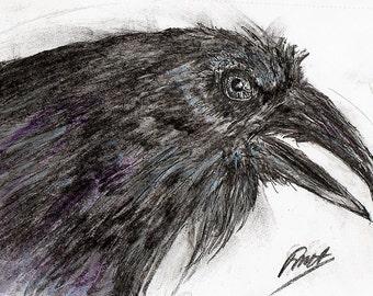 Raven Head Drawing, Raven Wildlife Drawing, Raven Wildlife Print, Raven Head Portrait, Bird lover's gift