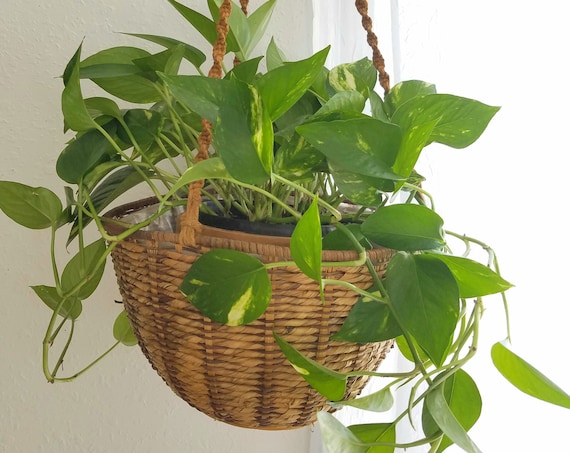Extra Large Round Wicker Plant Hanger