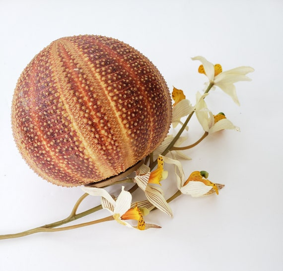 Vintage Orange Urchin Shell Pompadour Fragrance Holder