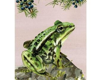 Adventure on the Heath • Green frog