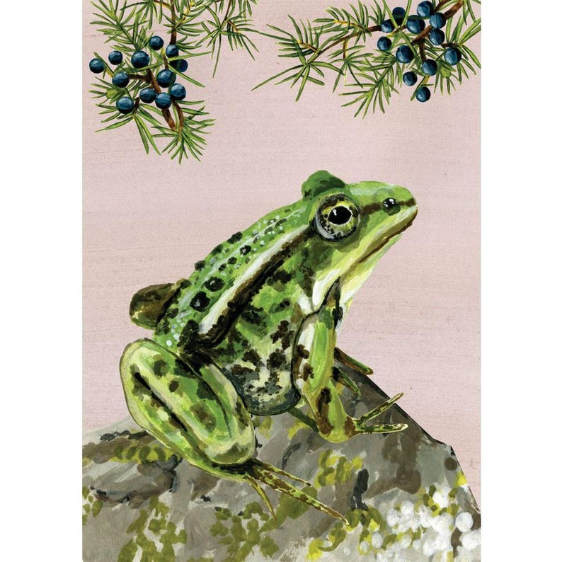 Adventure on the Heath  Green frog image 0