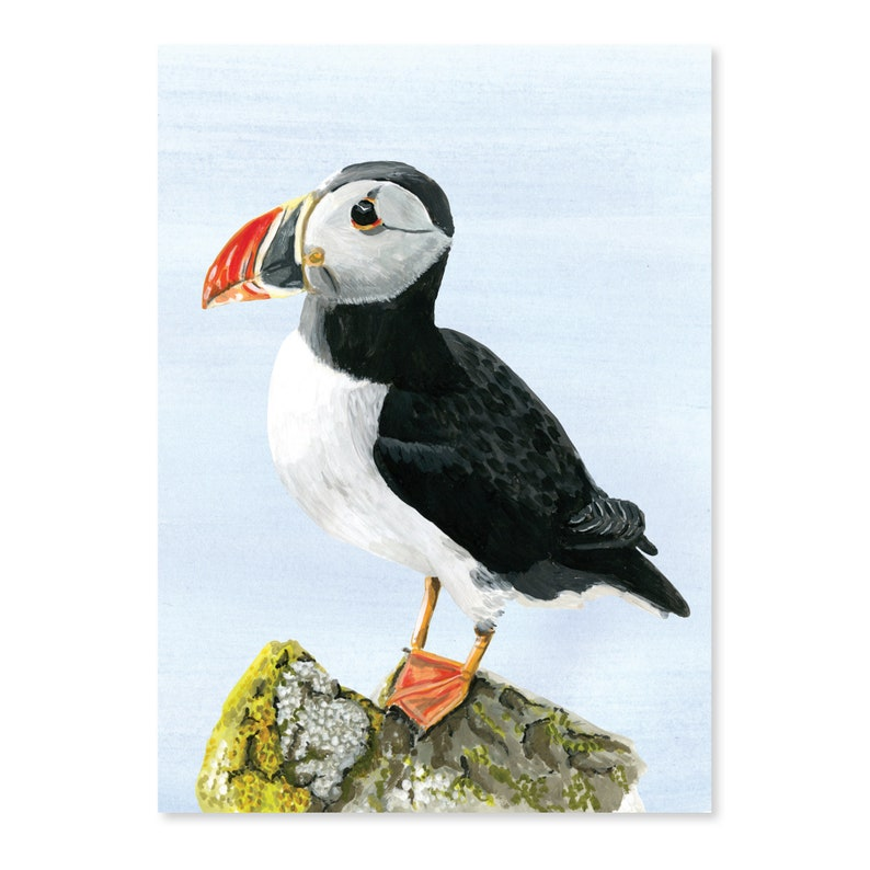 Adventure at sea  Puffin image 0
