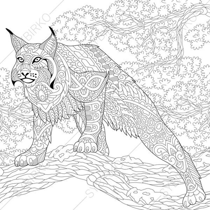 Coloring Pages For Adults Wildcat Lynx Bobcat Caracal