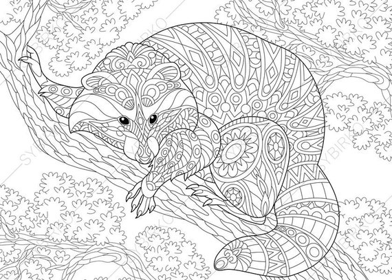 Raccoon. Coloring Pages. Animal coloring book pages for Adults. Instant Download Print