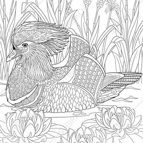 2 Coloring Pages Animal Book
