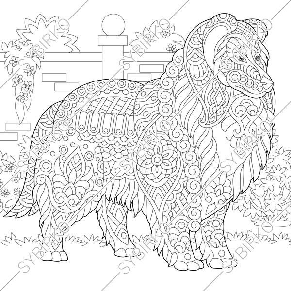 Coloring pages for adults. Rough Collie. Shetland Sheepdog ...